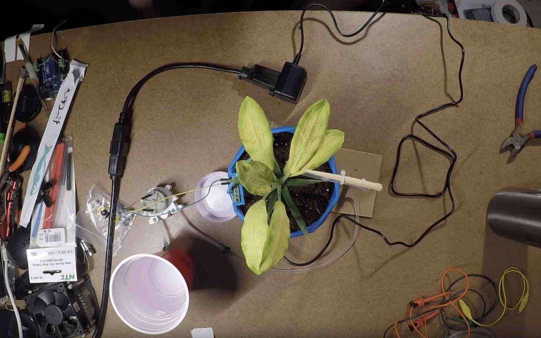 Self-Watering Flower Pot project